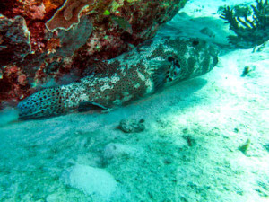 Beautifull-reef-fish in Nigaloo reef