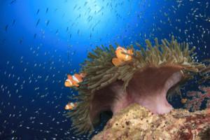 Nemo-Australia