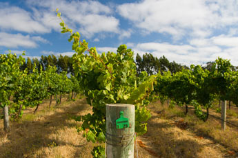 surrounding wineries