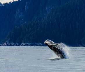 Kaikoura-Whale
