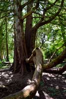 Kilkenny park