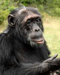 Chimpanzee Sanctuary