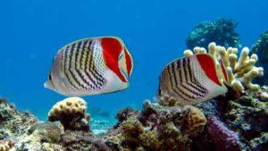 Yolanda Reef diving