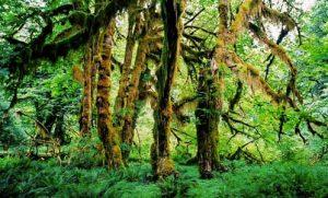 Sinharaja Forest