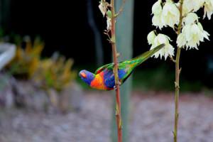 Australian-birds-@-Dandenong