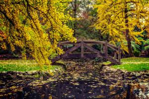 Autumn-leaf-color-in-Dandenong