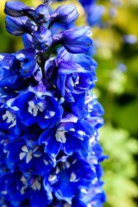 beautiful-summer-flowers-Dandenong-Ranges