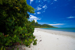 Cape-Tribulation-with-traveller-hints
