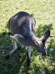 Cohunu Koala Park