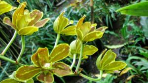 Fllowers-on-lombok