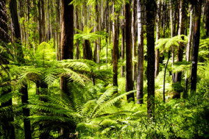 travel-tips-and-advice-to-Dandenong-in-victoria
