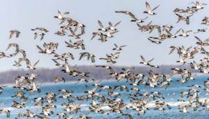Bundala-National-Park-birds