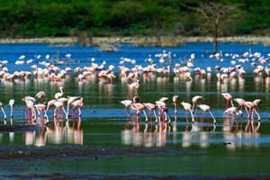 Bundala-National-Park-birds-creek