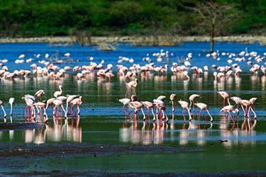 Bundala-National-Park