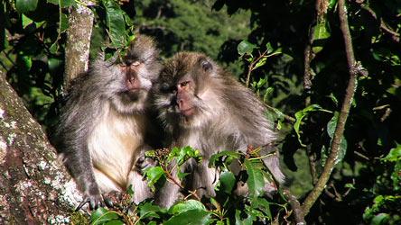 Pusuk-Monkey-Forest