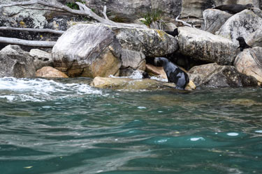 Sea-Lion-breeding-colony