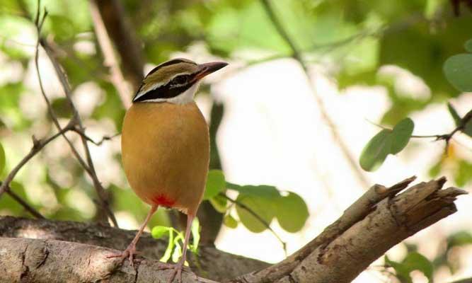 Birds Migrate