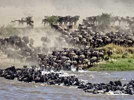 Masai Mara National Reserv