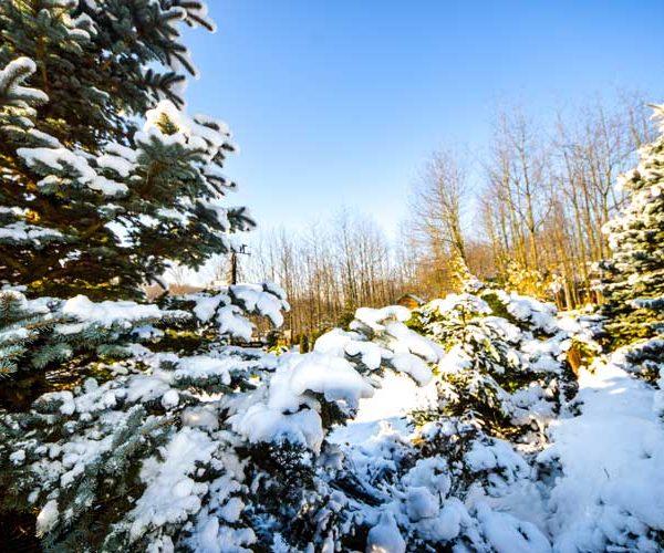 Sun Valley ski